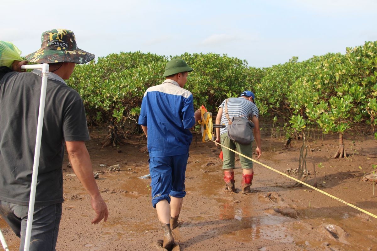 Mangroves are Vital to Vietnam's Coastal Communities