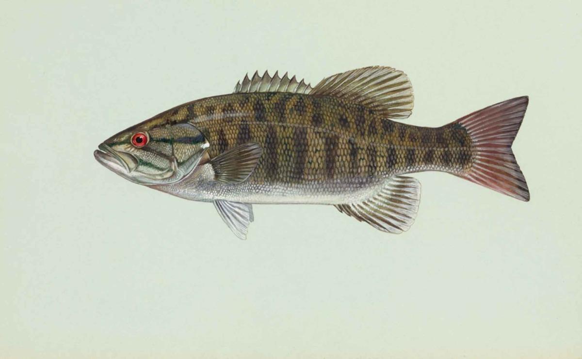 I don't eat fish guts, so do I really eatmicroplastics?